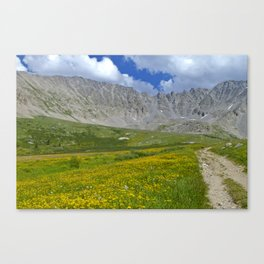 Mayflower Gulch brimming with wildflowers Canvas Print