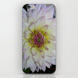 Dahlia Pastel Tones iPhone Skin