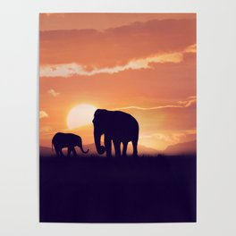 Baby and mother elephants at sunset Poster