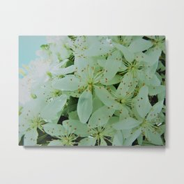 Pale Green Spring Blossoms, Oregon Metal Print