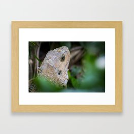 Iguana - Reptile Photography Framed Art Print