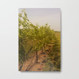Grapevines in the Sunshine Fruit Color Photography Metal Print