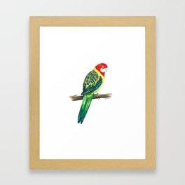 Bird Painting, Bird Art, Bird Print, Bird Watercolor, Art, Australian Bird, Australian Art, Native A Framed Art Print