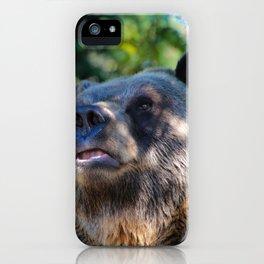 sunny bear iPhone Case