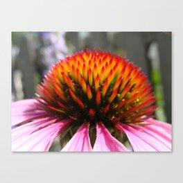 Lavender Echinacea/Coneflower Canvas Print