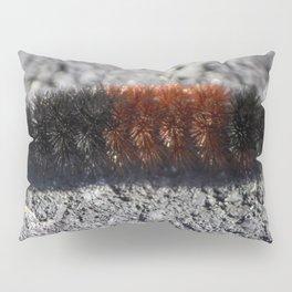Banded Woolly Bear Caterpillar Pillow Sham