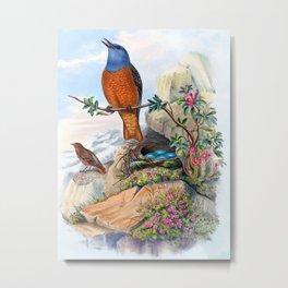 Rock Thrush, Thrush Bird, Petrocincla saxatilis, Antique Bird Print by HC Richter, Birds of Great Britain Metal Print