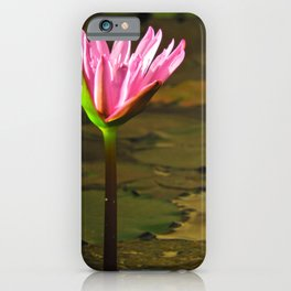 Flower standing alone in a pond iPhone Case