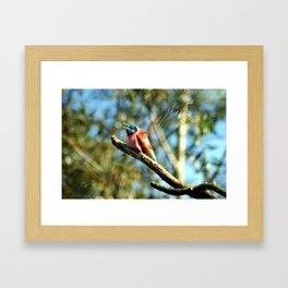 bee-eater 2 Framed Art Print
