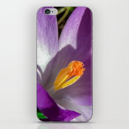Spring Crocus iPhone Skin