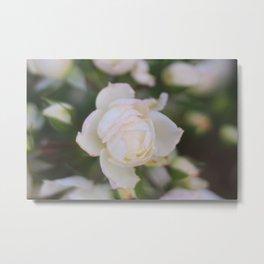 White pink rose summer bokeh Metal Print