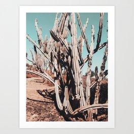 Desert Cactus Photography | Cacti Nature Art Print