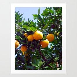 California Citrus Art Print