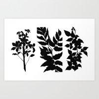 Plant Silhouettes Art Print