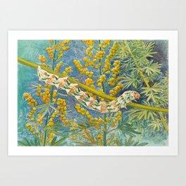 Cucullia Absinthii Caterpillar Art Print