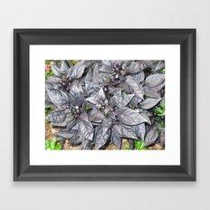 Sept Gardens 047 Framed Art Print