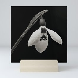 Snowdrop blossoms floral black and white photography / photograph Mini Art Print
