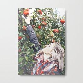 Harvest Apples Metal Print