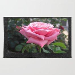 Pink Roses in Anzures 6 Blank P4F0 Rug