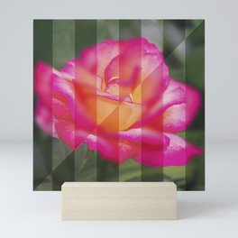 Rose Flower From A New Angle Mini Art Print