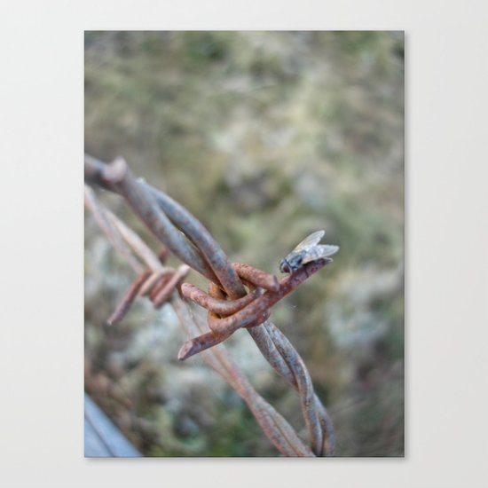 Fly Meets Barbed Wire Canvas Print