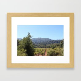 Vineyards, California Framed Art Print