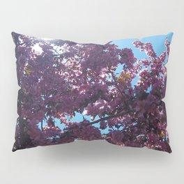 Sweet Creations Pillow Sham