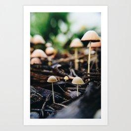 Tiny Shrooms Art Print