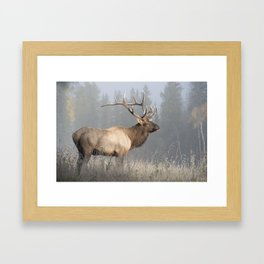 Bull Elk One Framed Art Print