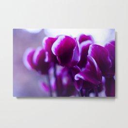 cyclamen flowers Metal Print