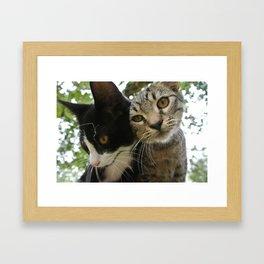 Kittens (*Koinonia*) Framed Art Print