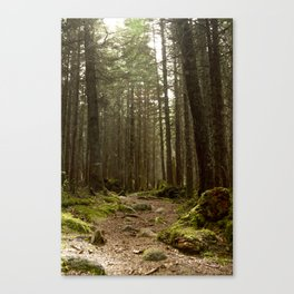 hike in the woods Canvas Print