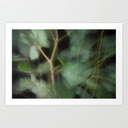 Abstract Eucalyptus Leaves on Black Background-Fleur Blur Series Art Print