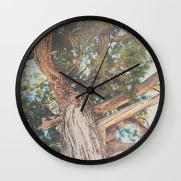 looking up through the leaves of the Juniper Tree ... Wall Clock