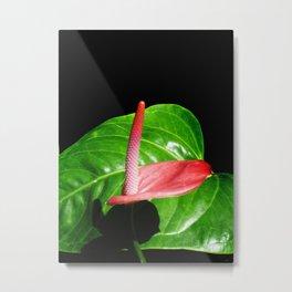 Calla and Leaf Metal Print