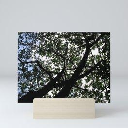 Looking up into the Kapok tree Mini Art Print