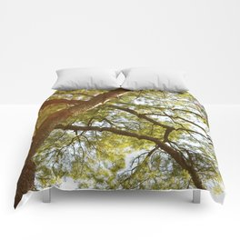 Great Pine Tree Comforters