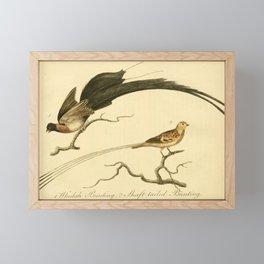 Vintage Print - Bullock's London Museum & Pantherion (1812) - Whidah Bunting / Shaft-Tailed Bunting Framed Mini Art Print