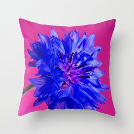 Macro shot of blue fresh cornflower on the pink background Throw Pillow