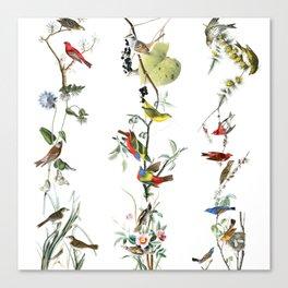 Birds - Art - Vintage - Pattern - Illustration - Nature Canvas Print