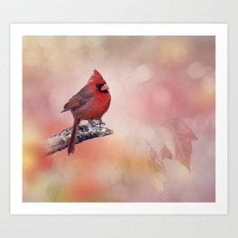 Male  Northern Cardinal perching on a branch Art Print