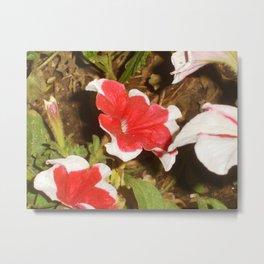 petunia, moose jaw, saskatchewan, canada Metal Print