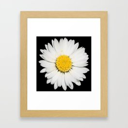 Top View of a White Daisy Isolated on Black Framed Art Print