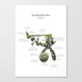 "The Birds & the Bees: ""the penis"" Canvas Print"