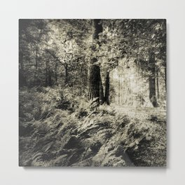 Woodland in black and white Metal Print