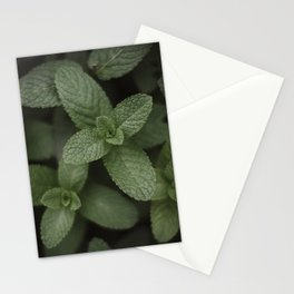 Mint at a desert farm in The Negev, Israel Stationery Cards