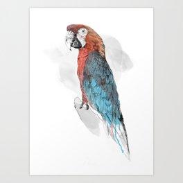 Cuban Macaw Art Print