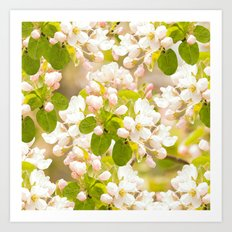 Apple tree branches with lovely flowers and buds on a pastel green background Art Print