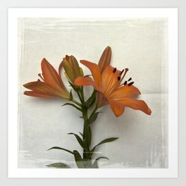 Botanical Lily No. 7797 Art Print