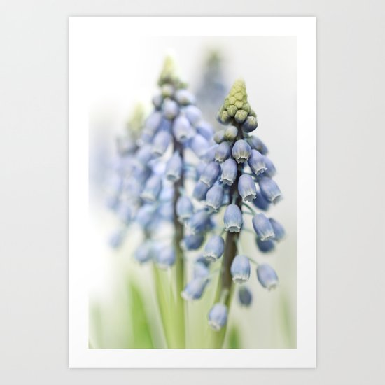 Grape Hyacinth VI Art Print